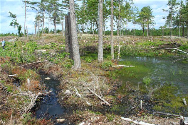 Kraftig underröjning har skett vid kärr och våtmarker över hela hygget. På så sätt har man förstört värdefulla biotoper i strid med gällande föreskrifter.