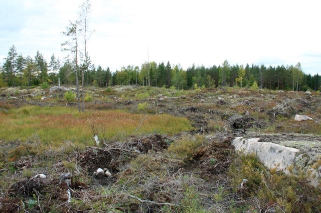 Det är bedrövligt att man 2013 skall kunna hitta så här dåligt genomförda slutavverkningar hos Sveaskog! Här har alla träd avverkats kring våtmarken /mossen i bildens vänstra hörn! Sveaskogs entreprenör har t.o.m utfört markberedning ute i själva våtmarken! Allt det här strider mot FSC:s regler.