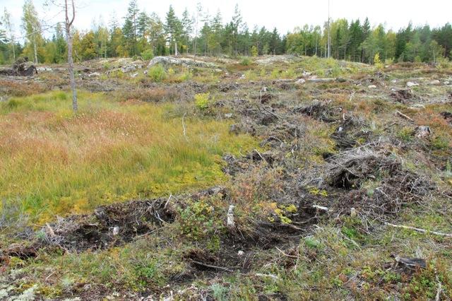 Istället för att lämna rejäla skyddszoner mot kärret vilket skall göras så har Sveaskog sopat ner all skog, utfört markberedning i kärret och avverkat träd ute i själva våtmarken!