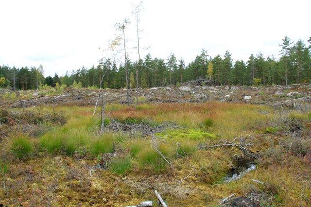 Den bristande naturvårdshänsynen på denna slutavverkning uppfyller inte Sveaskogs egna krav och regler. Bilden ovan visar ytterligare en våt- mark som helt skalats på skyddszon.