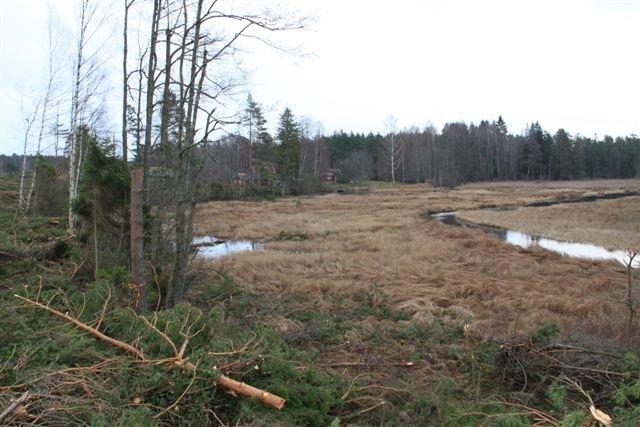 Ansvarig maskinförare har avverkat utan att lämna rejält tilltagna zoner mot våtmarken. Ett mycket vanligt fel som påtalats i minst 10 år utan att det blivit bättre!