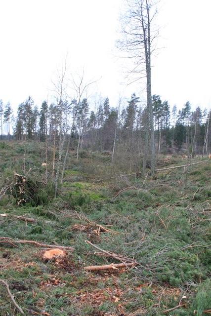 Inte heller kärr inne i den f.d skogen har skonats med rejält tilltagna skyddszoner! Detta är ett regelbrott mot FSC bestämmelser.