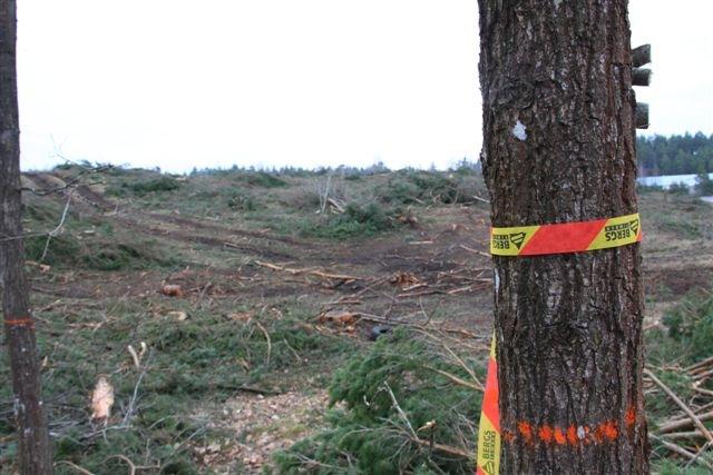 Redan vid ett första besök på platsen där det en gång växte en skog kan vi konstatera att Berg Skog AB  inte genomfört avverkningen enligt gällande regler! Vi ser här en slutavverkning med mycket dålig naturhänsyn som drar på sig en anmälan om avvikelser från FSC-standarden!
