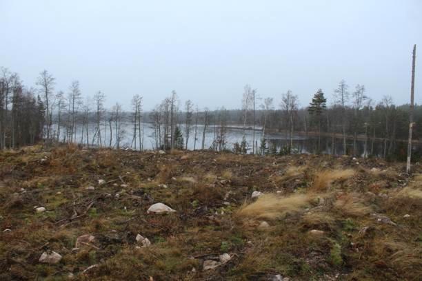 En enkel trädrad är allt som återstår mot vattnet! Varför tar inte Södra sitt ansvar för ett uthålligt och miljöanpassat skogsbruk? Det skall lämnas en rejäl zon mot en sjö. Av detta finns ingenting här. Det blir återigen bottenbetyg för Södras avverkning!