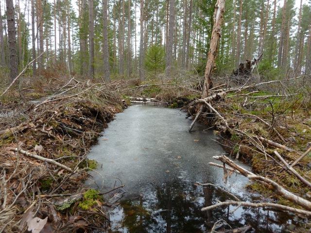 Kommun körskad våtmark kronop 1030974