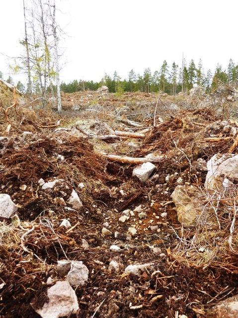 Skogsmarken är plöjd på djupet. Marklager, orörda sedan istiden är nu genombrutna och förstörda. Skogbottens livsmirakel i form av mångtusenåriga svampmycel är svårt skadade och marken läcker ut allt bundet kol till atmosfären vilket bidrar till klimatpåverkan!