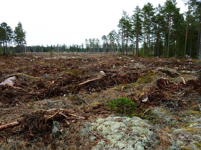 Den artrika olikåldriga skogen i anslutning till fågellokalen Idhultesjön är skövlad trots löften om en försiktig huggning med stor hänsyn! Området är hyggesplöjt.