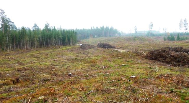 Älgsjön 1 Högsby 1040595