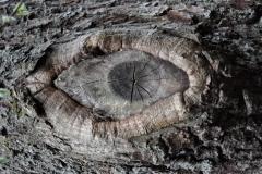 Skogens väv